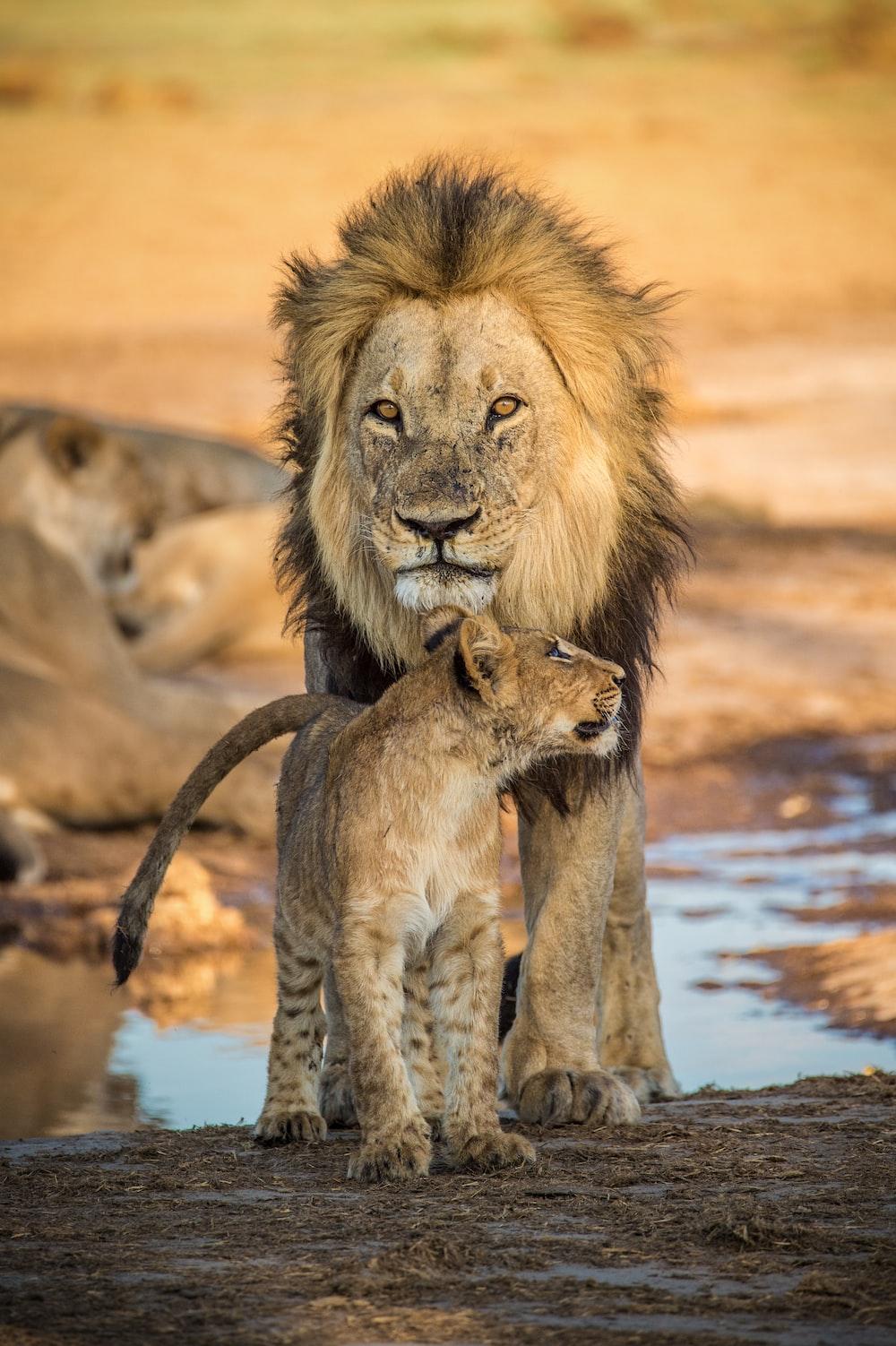 brown lion on water during daytime