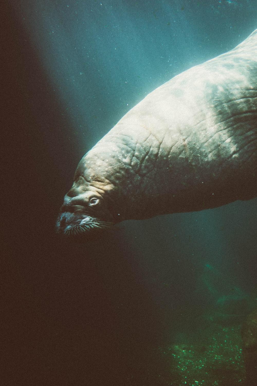 sea creature under the sea