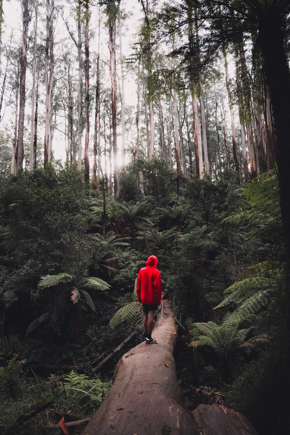 person in red hoodie standing on brown rock surrounded by green trees during daytime