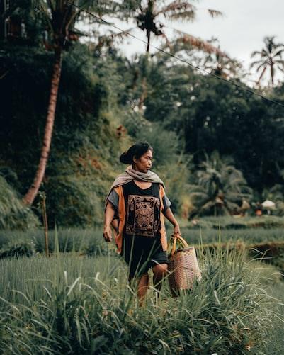woman picking rice