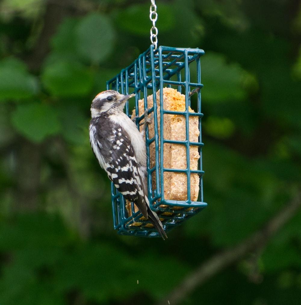 blue and white bird on brown metal bird feeder
