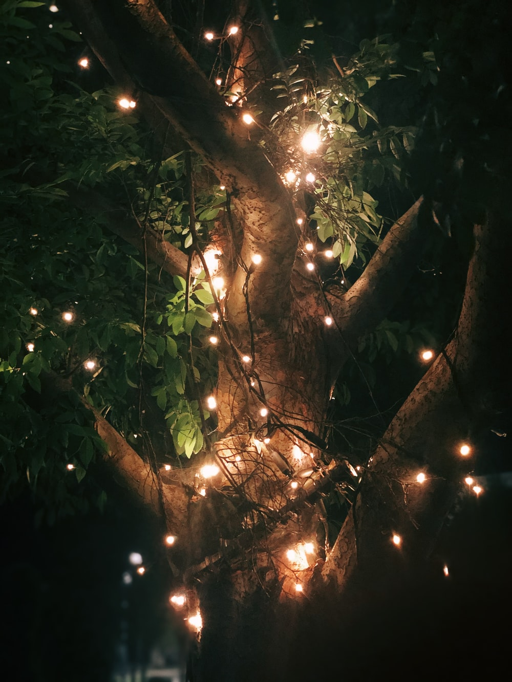 green leaves with yellow string lights