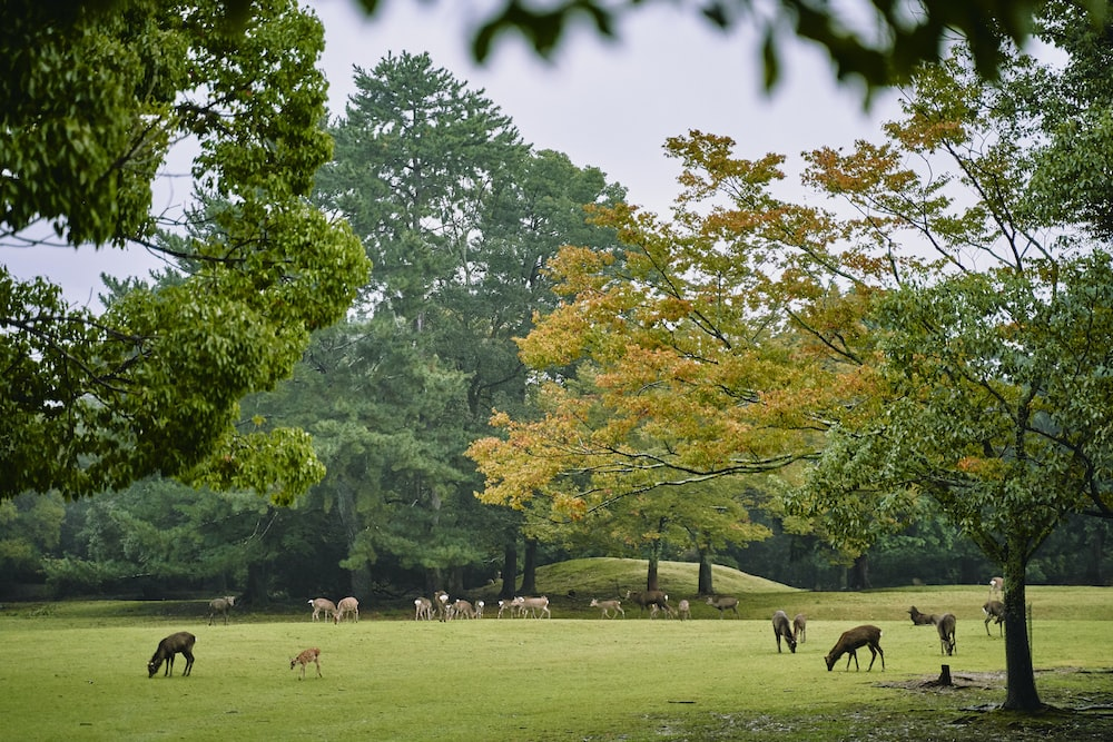 horses on green grass field during daytime