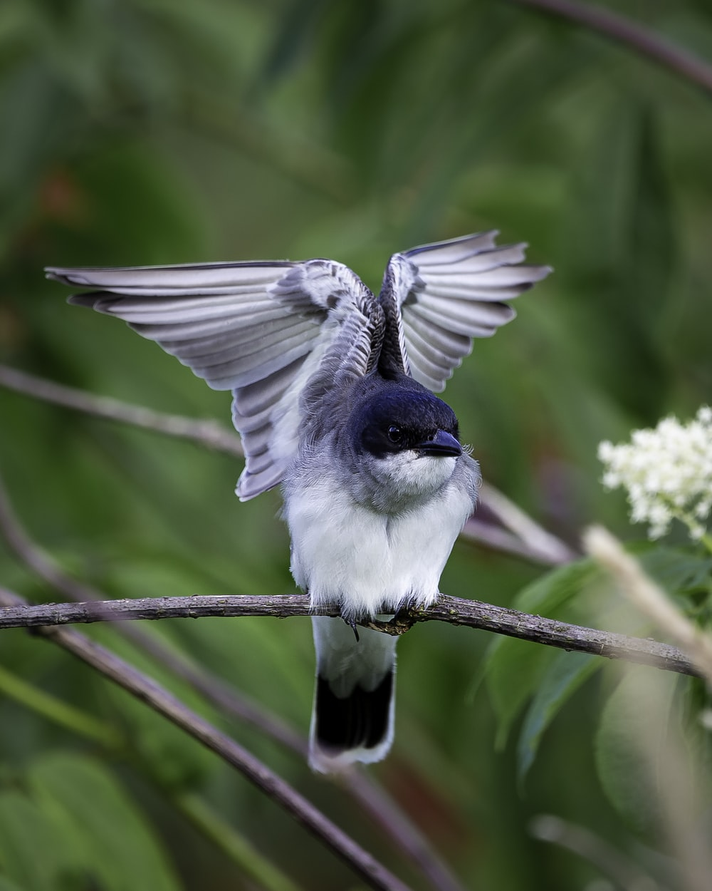 blue and white bird on tree branch