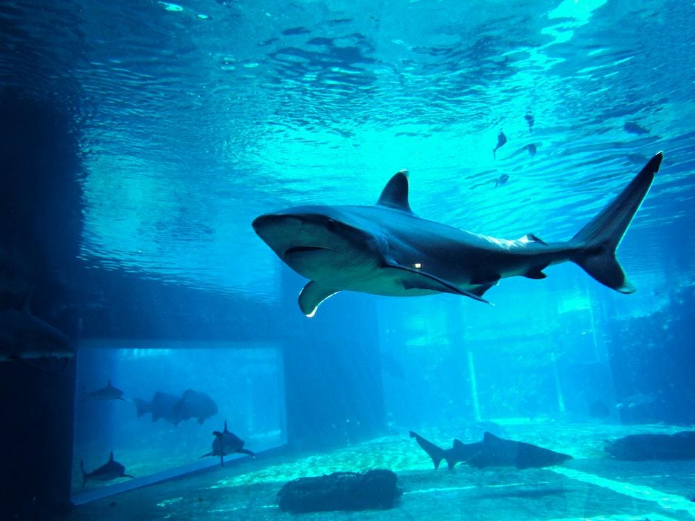gray shark in fish tank