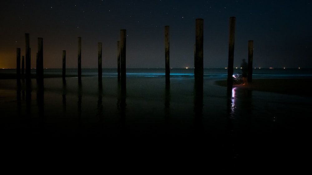 brown wooden posts on sea water during daytime