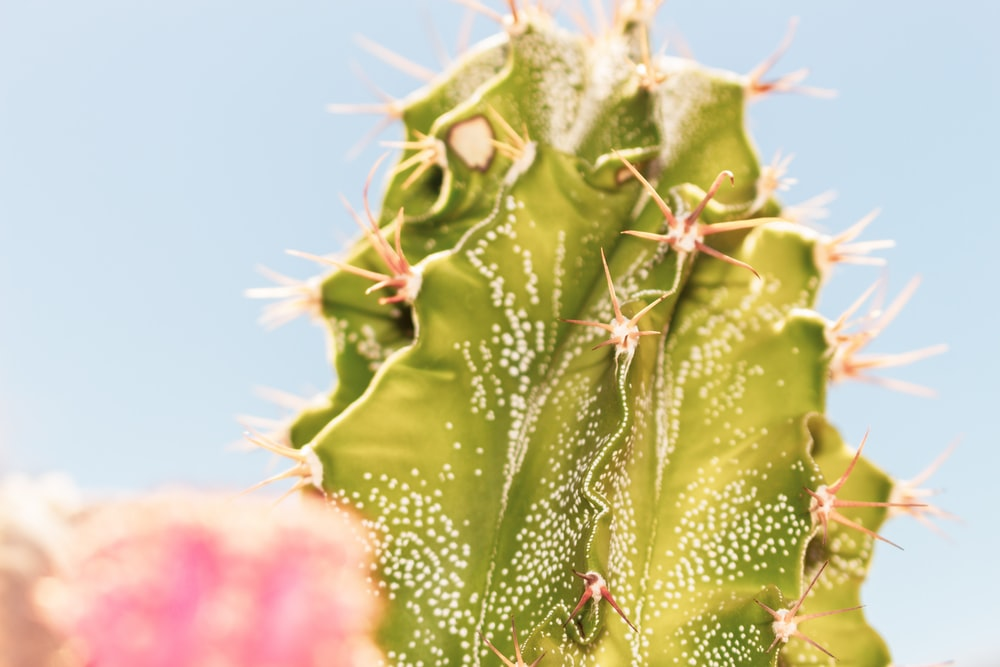 green cactus with water droplets