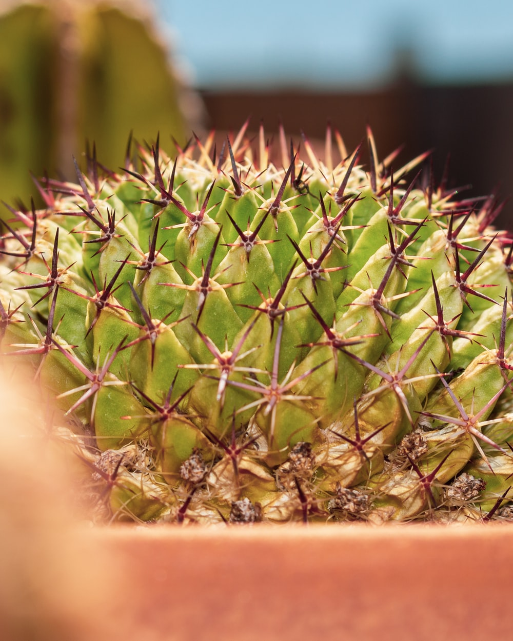 green cactus in brown pot