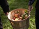 green and red apples in brown wooden bucket