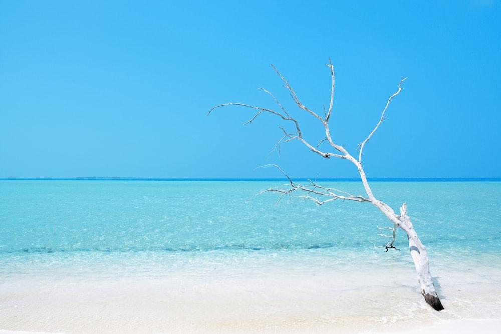 bare tree on white sand beach during daytime