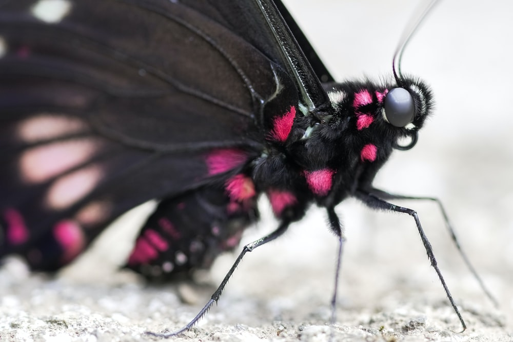 black and white butterfly on gray concrete floor