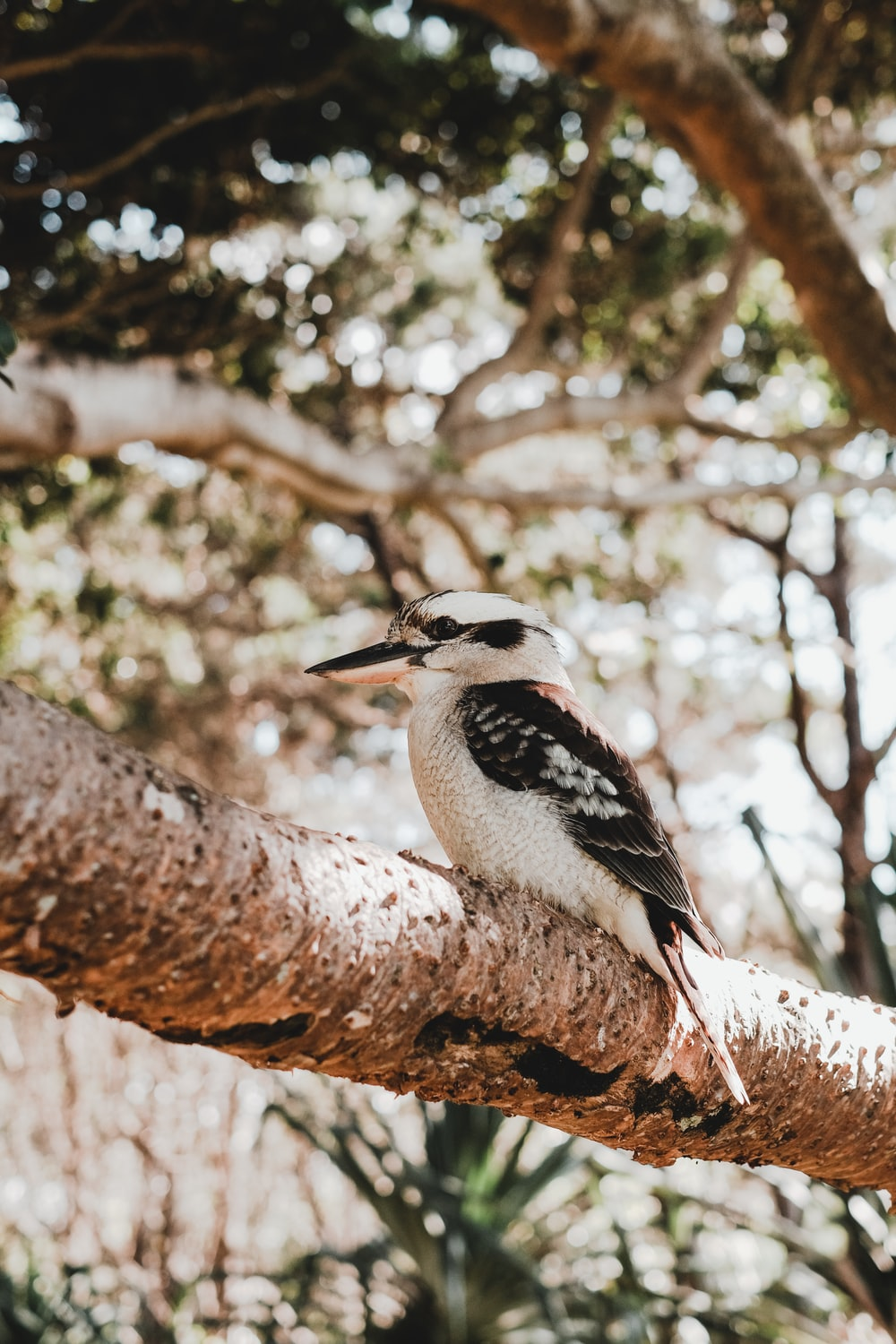 black and white bird on brown tree branch during daytime