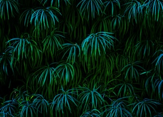 green leaf plant during night time