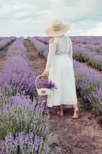The Lavender Girl  hades stories
