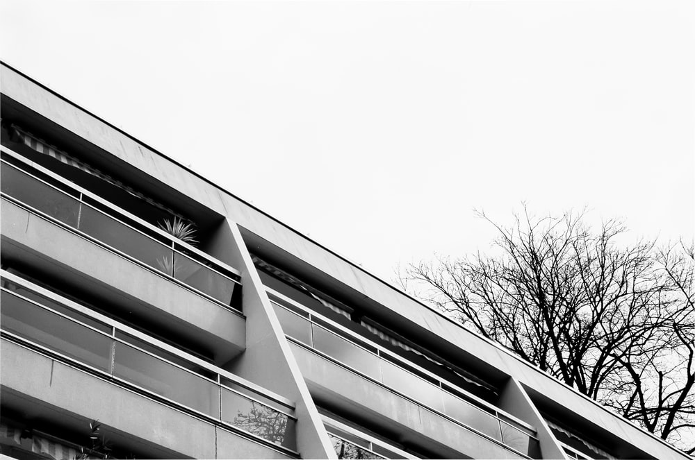 grayscale photo of bare tree beside building