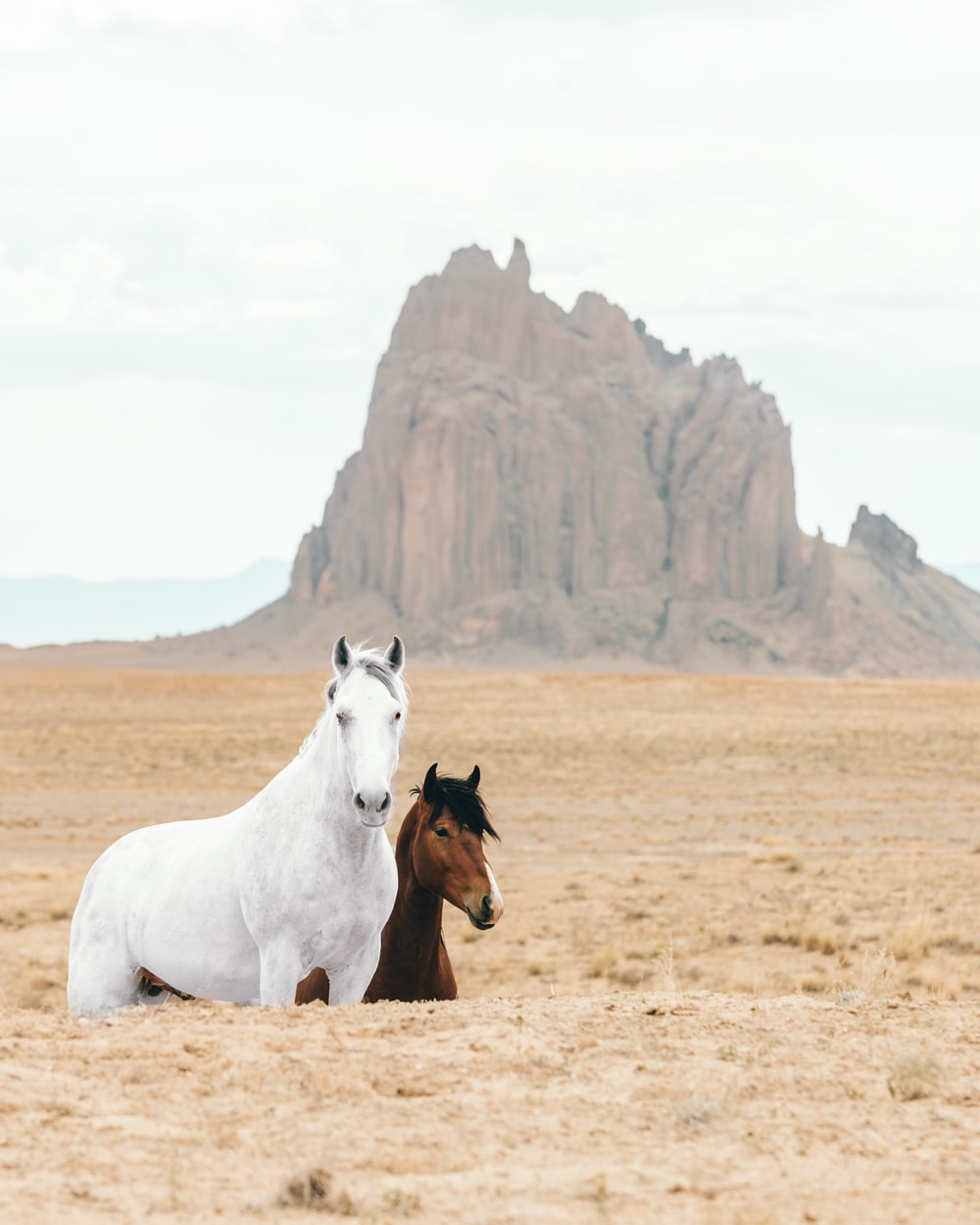 white and brown horses on brown field during daytime