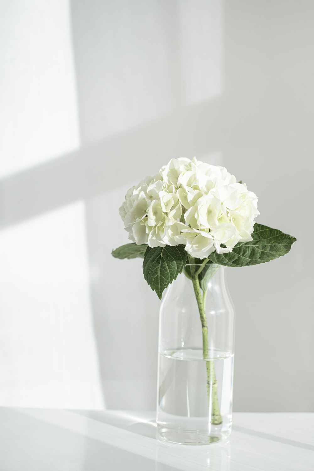 white rose in clear glass vase