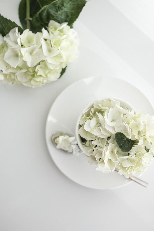 white roses on white ceramic plate