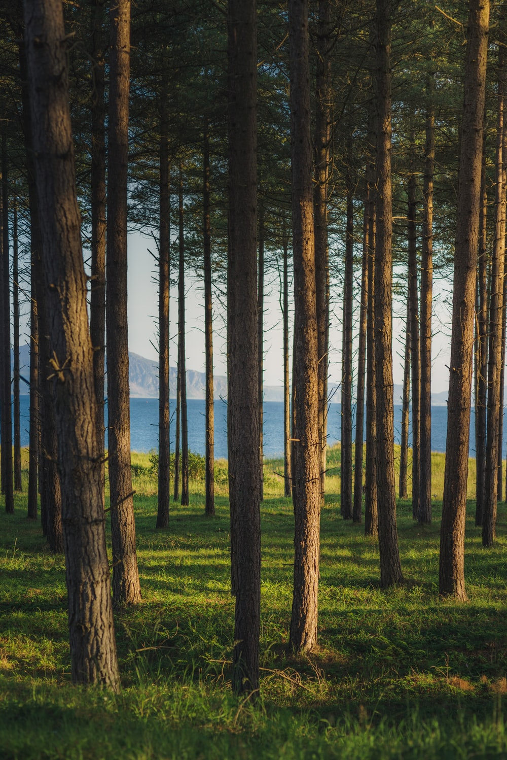 brown trees on green grass field near body of water during daytime