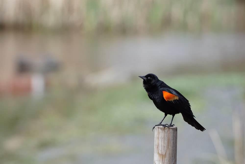 black bird on brown wooden post during daytime