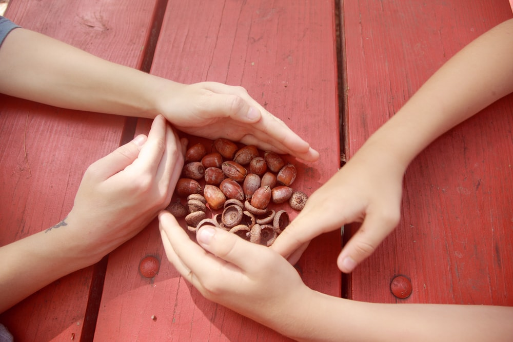person holding brown coffee beans