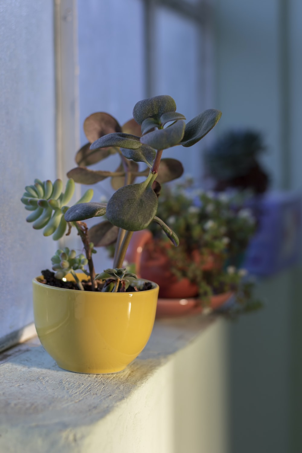 green and brown plant in yellow ceramic pot