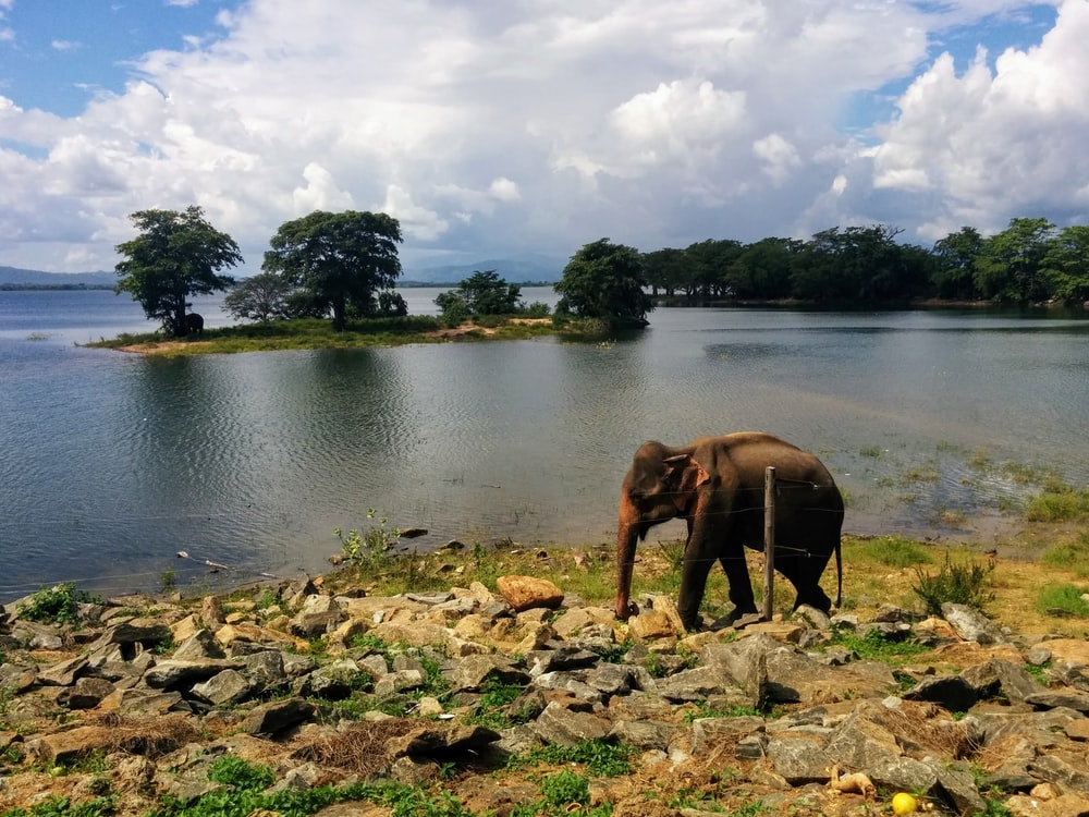 brown elephant on river during daytime