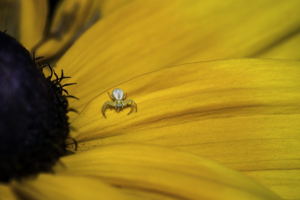yellow sunflower with water droplets