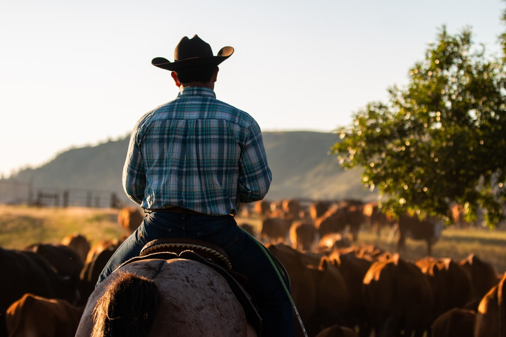 man in blue and white plaid dress shirt and brown cowboy hat sitting on brown horse