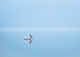 white swan on blue sea during daytime