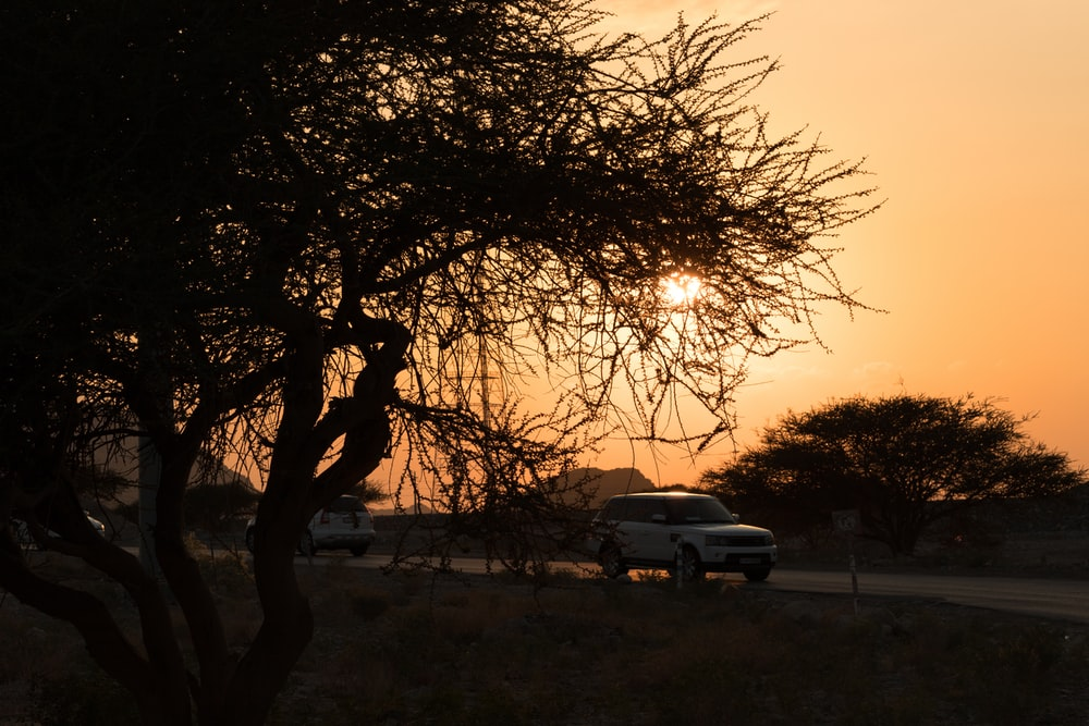 white car parked beside tree during sunset