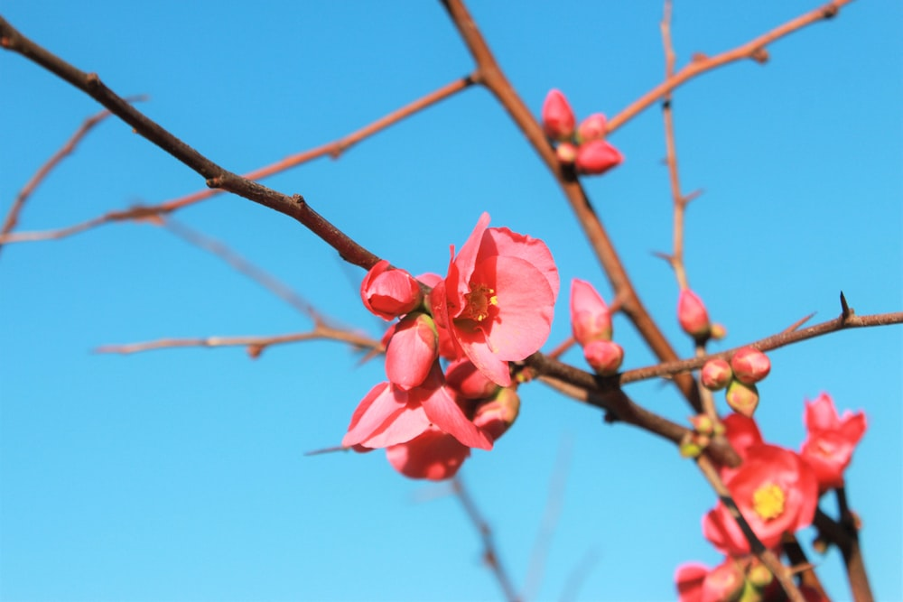 pink flower on brown stem during daytime