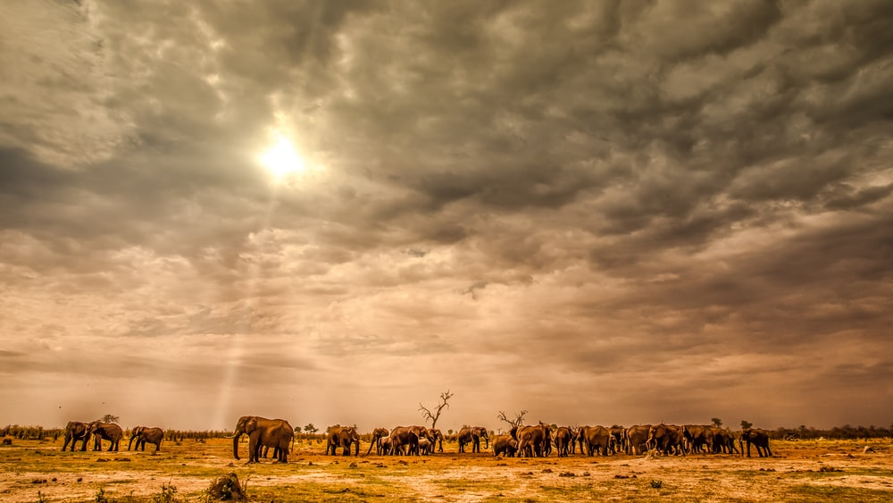 group of horses on field under cloudy sky during daytime