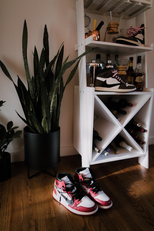 green indoor plant beside white wooden shelf