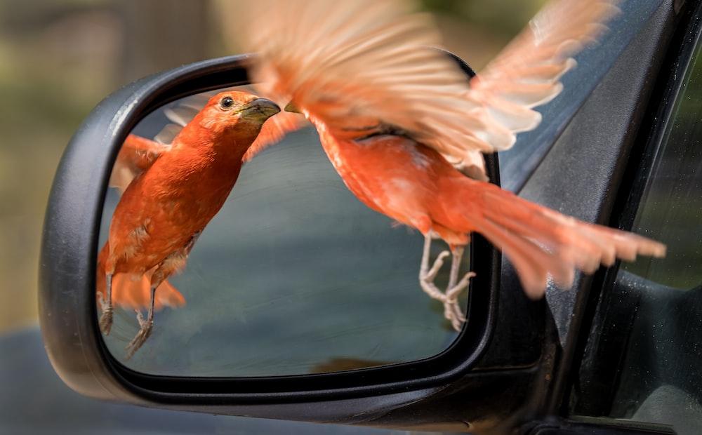 brown bird on car window during daytime