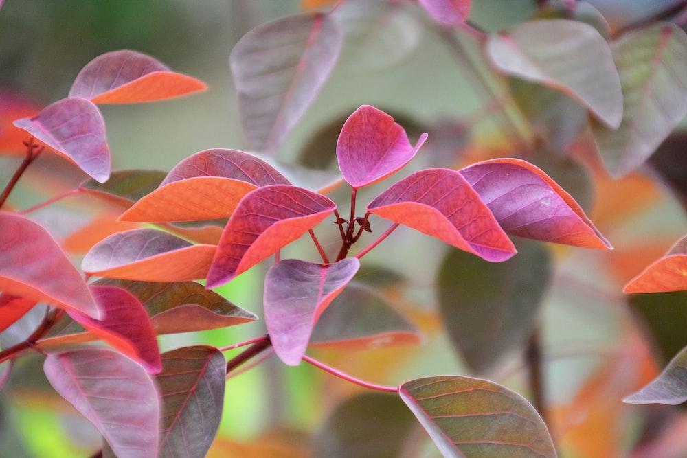 red and green leaves in tilt shift lens