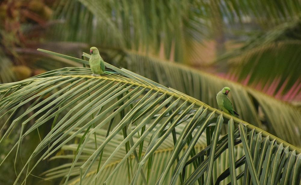 green bird on green leaf