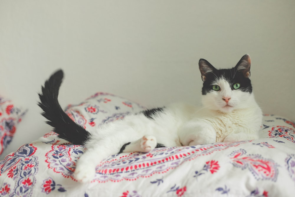 white and black cat lying on white and red floral textile