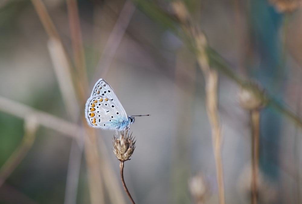 blue and white butterfly perched on brown stem in tilt shift lens