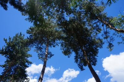 green trees under blue sky during daytime armenia zoom background