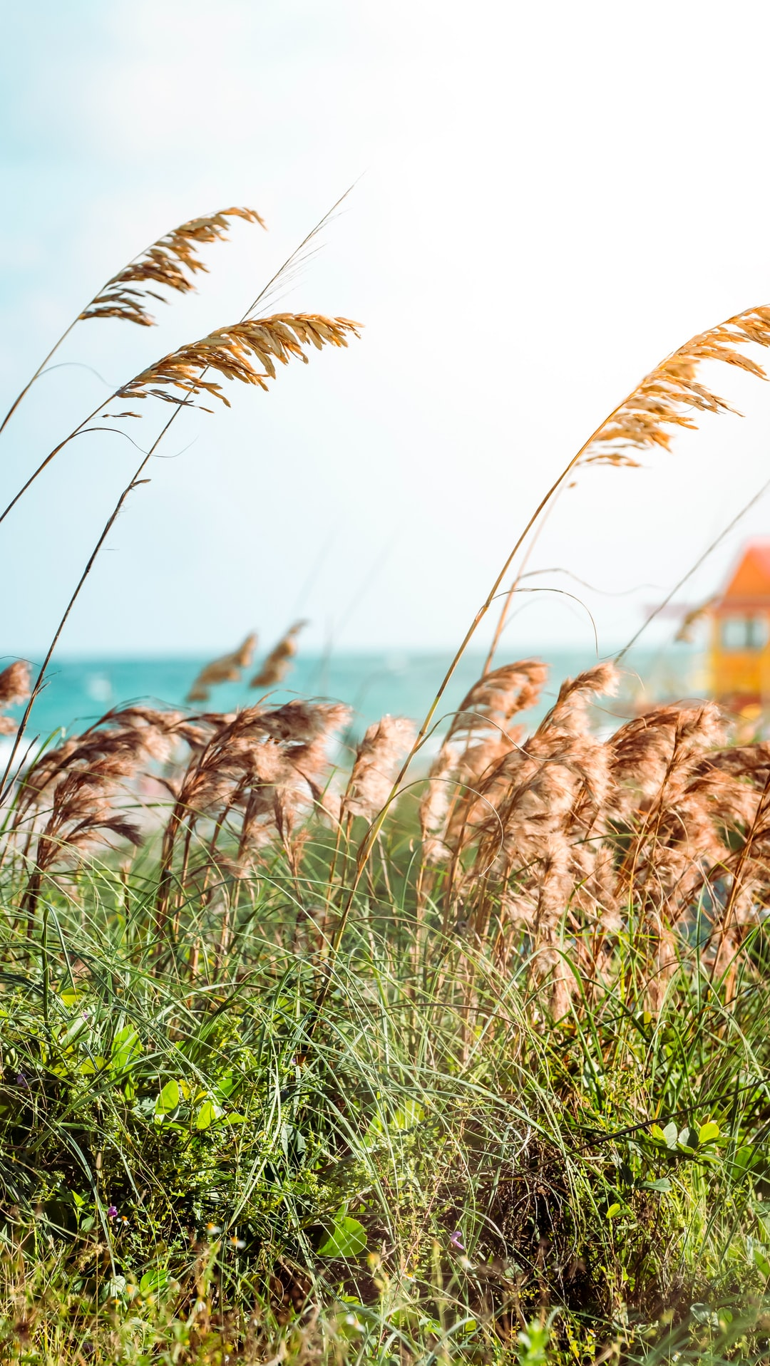 A summery photograph of the grass next to a warm Atlantic on South Beach in Miami.