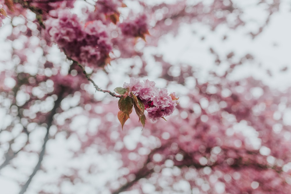 pink flowers in tilt shift lens