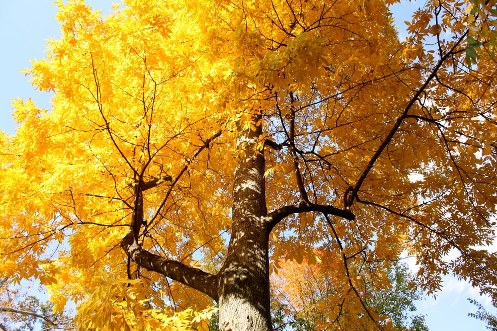 yellow and brown tree during daytime