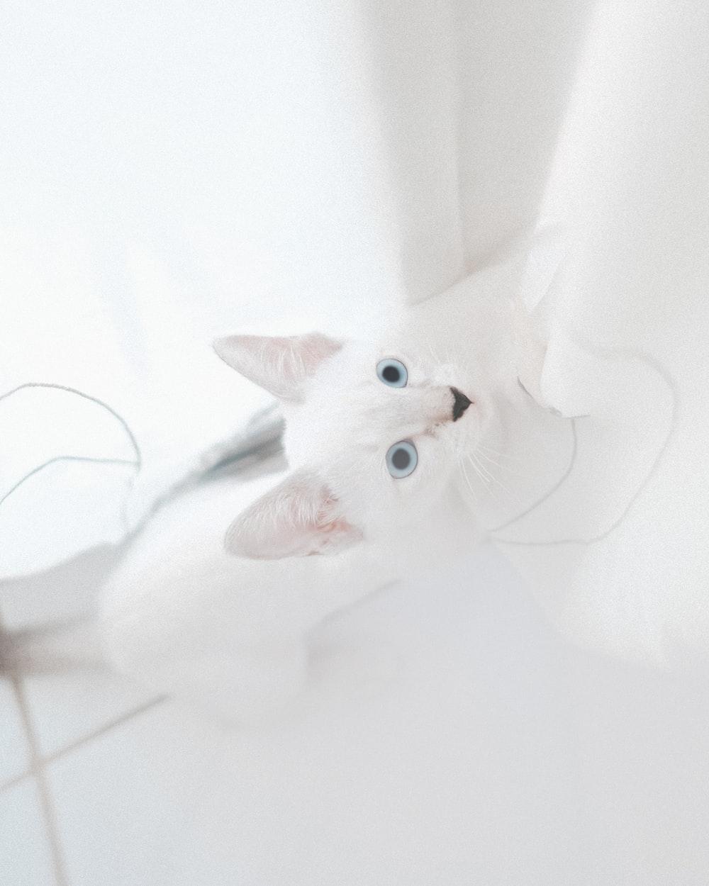 white cat on white textile