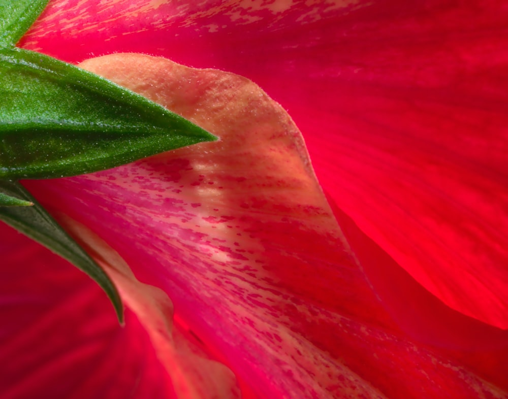 red flower in macro photography