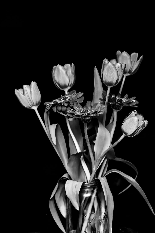 white tulips in black background