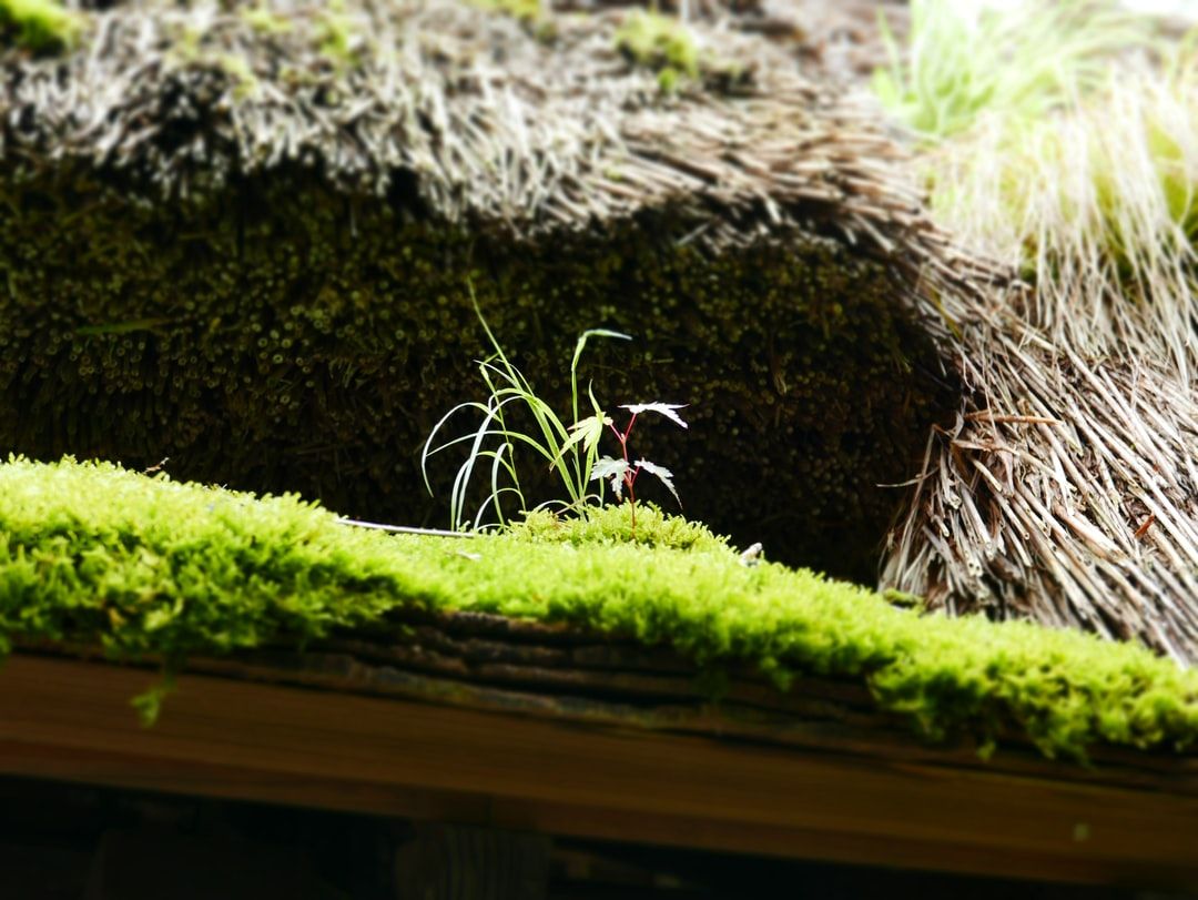 Micro-habitat