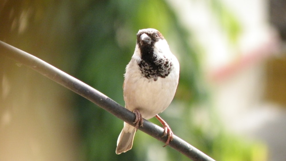 white and black bird on brown tree branch during daytime