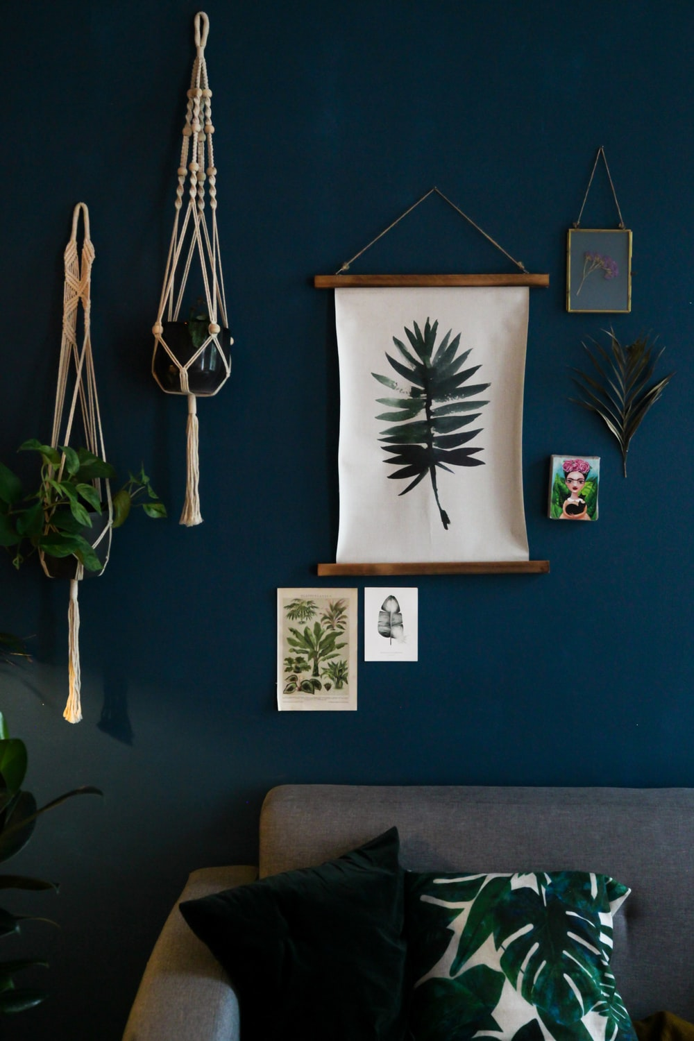 green indoor plant on blue wall