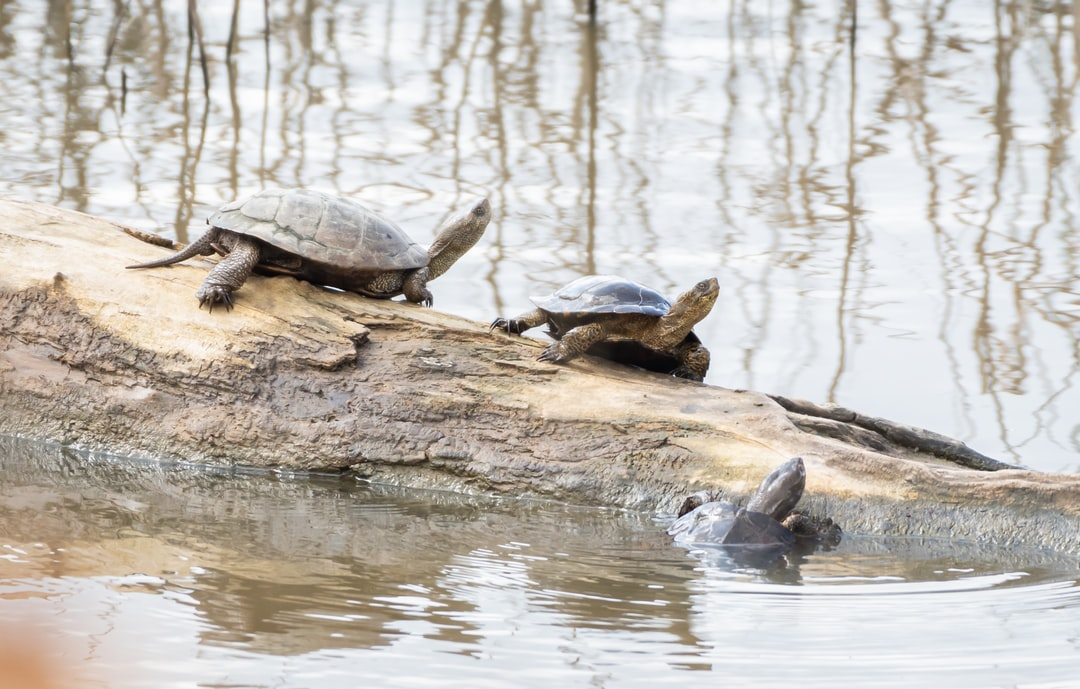 Three turtles laughing at each other
